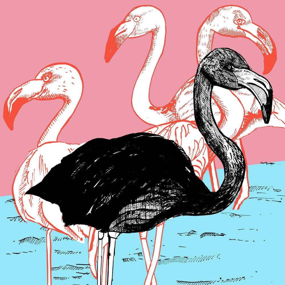Black Flamingo.jpg