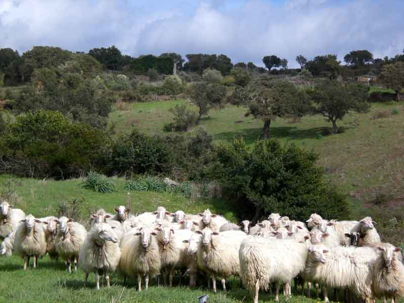 Localized production - Sardinian sheep wool dyed locally