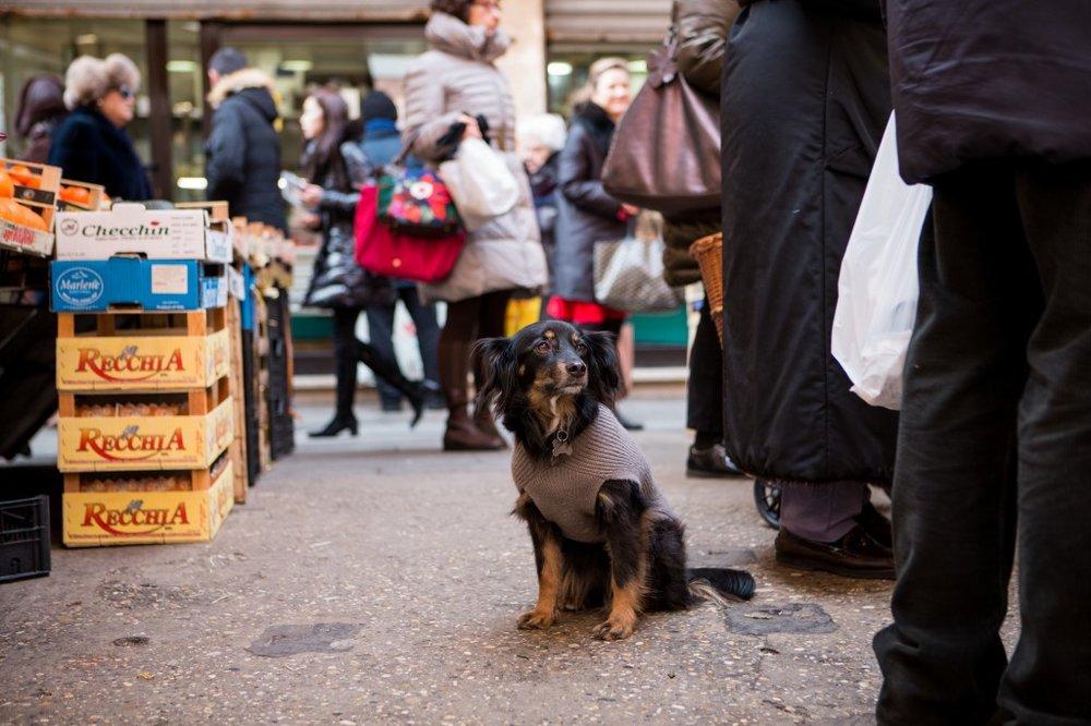 market-dog-1024x682.jpg