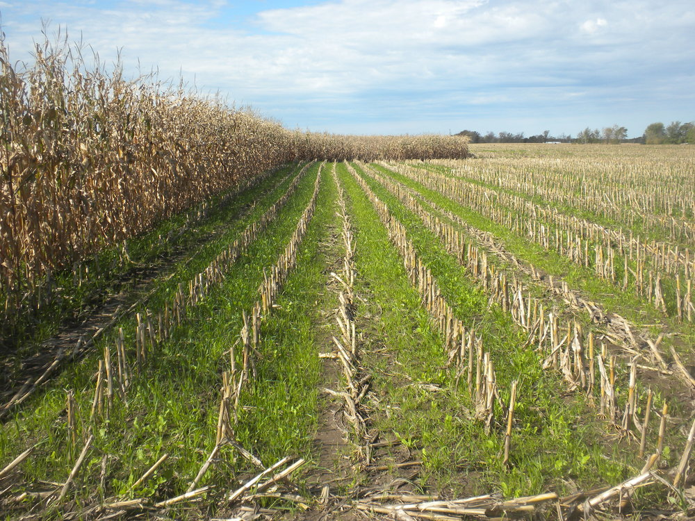 FY2016 CWF-3 Welsh Cover Crops_3.JPG