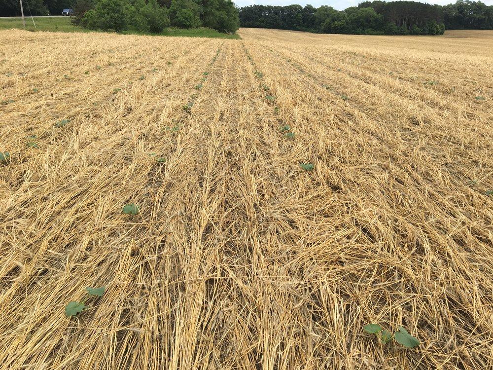 Stoney Brook Farm Field 20 June 22th 2018 3.jpg