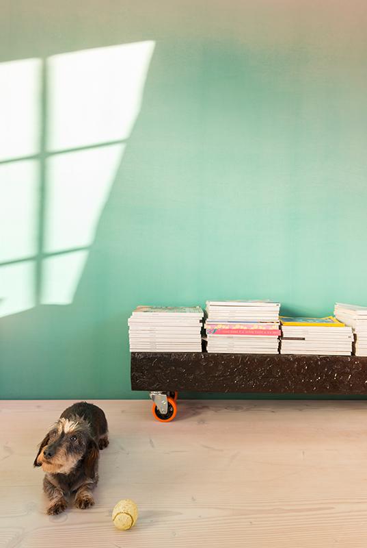 mini-dachshund-home-interiors