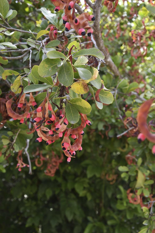 wild-flowers-tulum