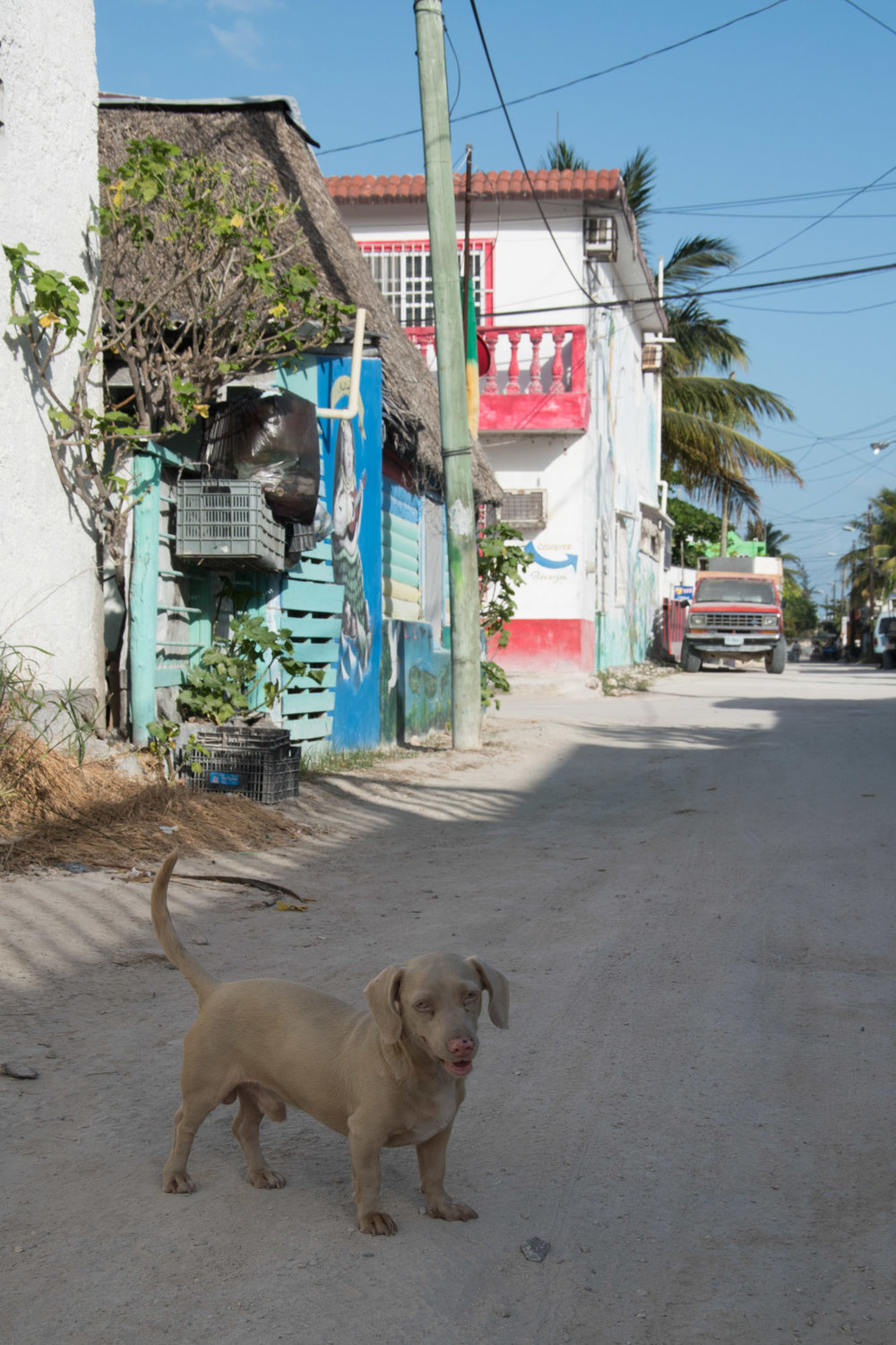 dog-streets-holbox