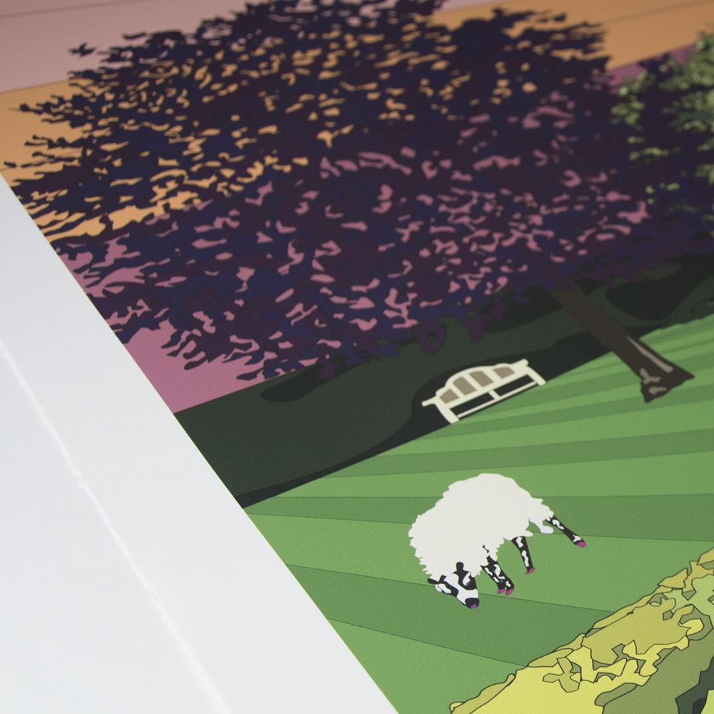 sheep-illustration