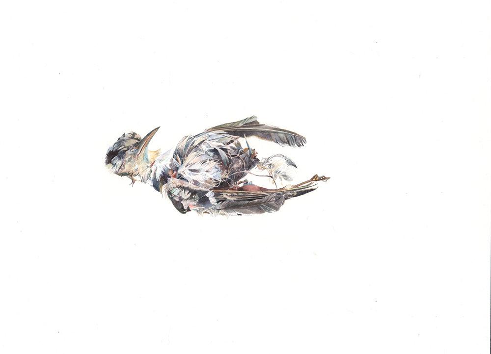 Half Bird
