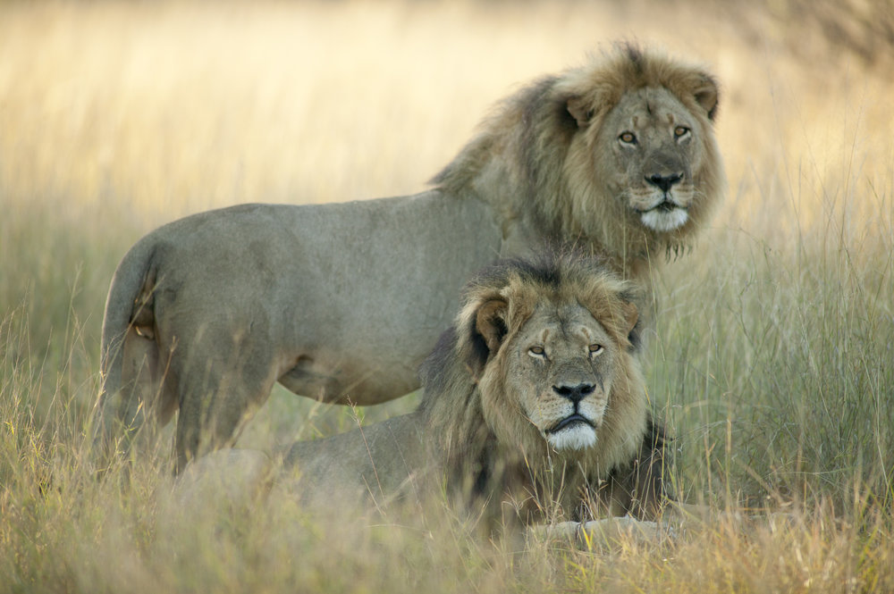 Cecil and Jericho.jpg