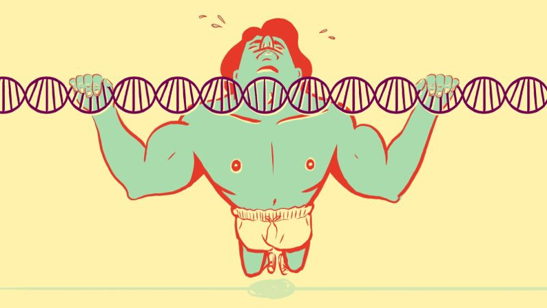 Skwarecki, B. (2015). How Much Does Genetics Really Affect Your Fitness?. [online] Vitals.lifehacker.com. Available at: https://vitals.lifehacker.com/how-much-does-genetics-really-affect-your-fitness-1747333767  Illustration by Tara Jacoby