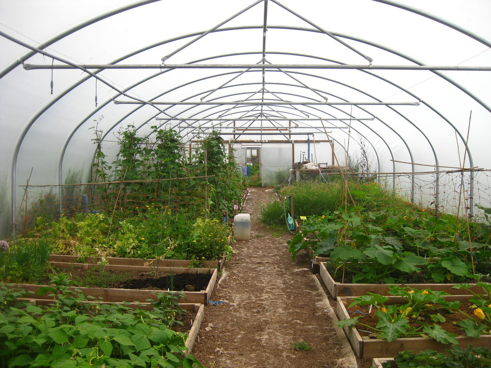 Local control over food production at Whitmuir Community Farm