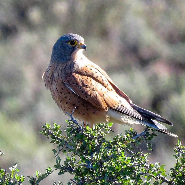 The Rock Kestrel⠀ ⠀ ⠀ ⠀ ⠀ #kestrel #rockkestrel #bird #birdphotography #birdphoto #birdsofinstagram #birdsofsouthafrica #wildlife #wildlifephotography #wildlifeaddicts #wildlifelovers #africanbirds #birdlife #birdlovers #birdwatching