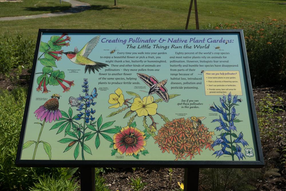 2016 Pollinator Garden-7.jpg