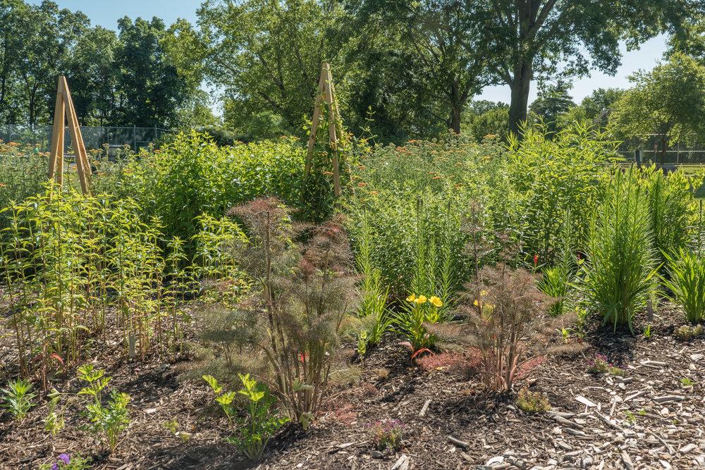 2016 Pollinator Garden-8.jpg