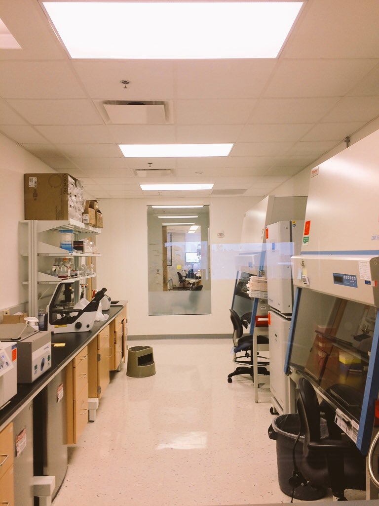 March, 2017 - The Yi-Gabel labs tissue culture becomes fully functional.