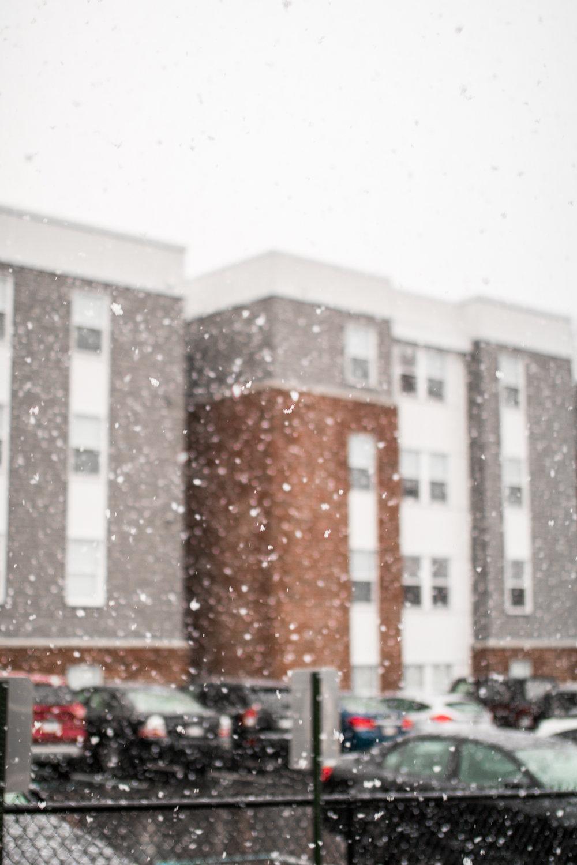 Snow - 6d arrival.jpg