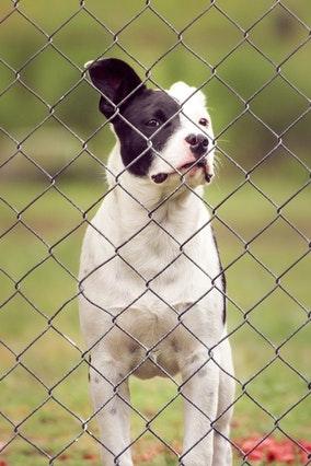dog friendly fence santa cruz