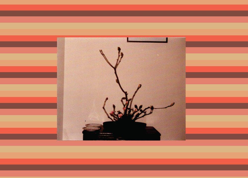 209f9-rosebudsandillumination-01.jpg