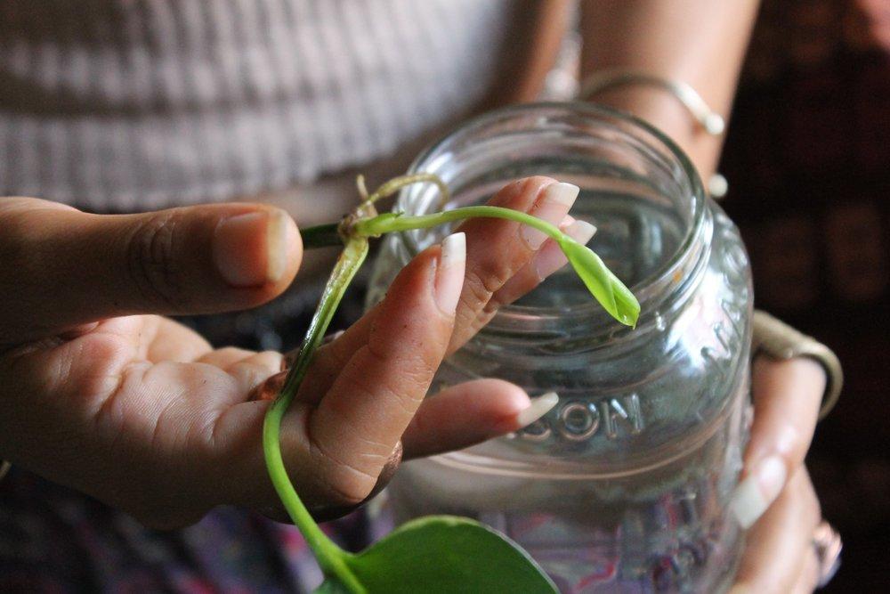 af363-blackpeoplewithplants_gypsi_collectionofcollectionsblackpeoplewithplants_gypsi_collectionofcollections.jpg