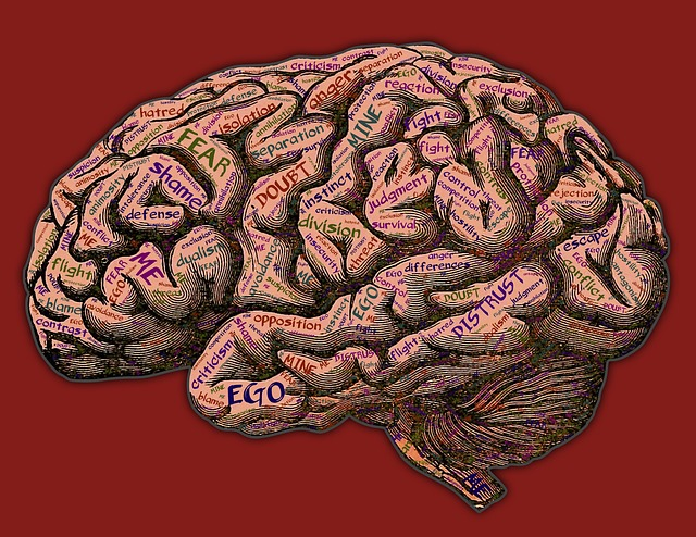 Distrust, criticism, flight, fear, doubt, anger - just some of the responses of the reptilian brain to threat