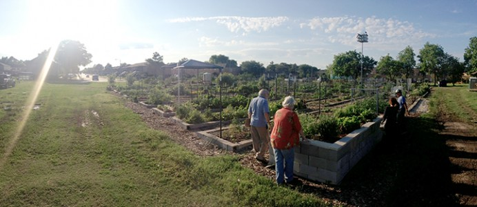 Westbury Community Garden. image: Asakura Robinson