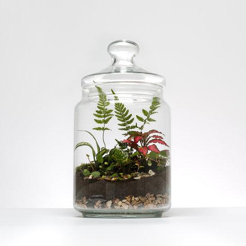 Leafage Cookie Jar Terrarium Leafage
