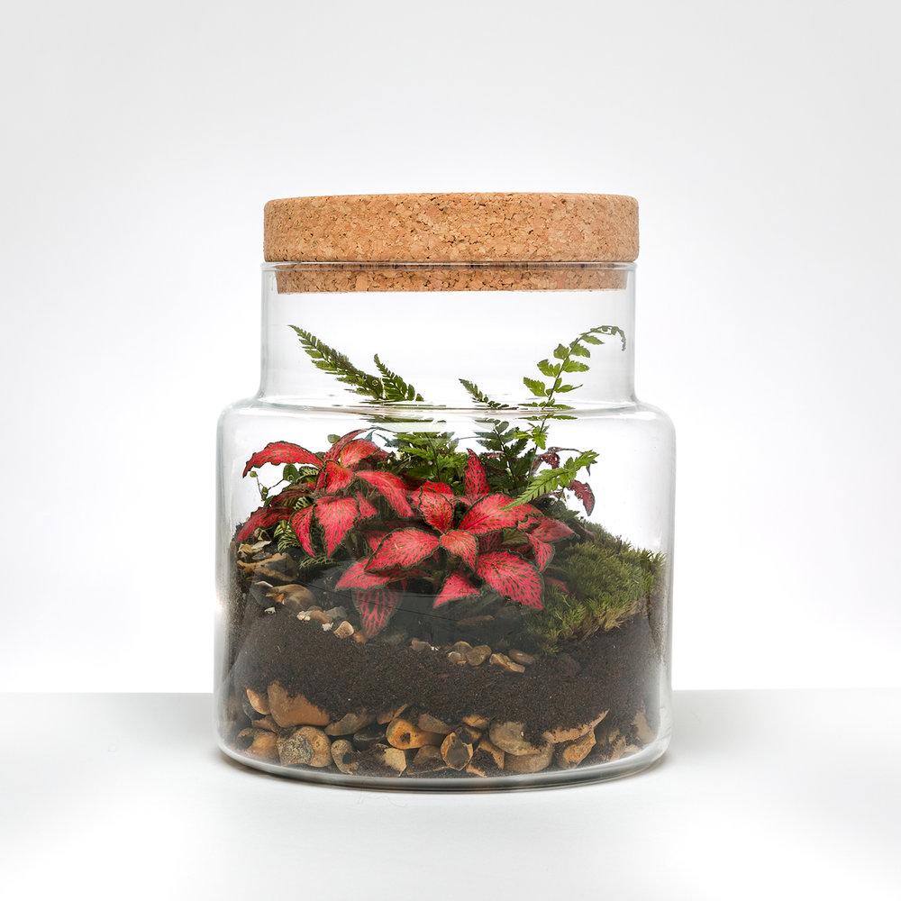 Copy of Cork Jar Terrarium