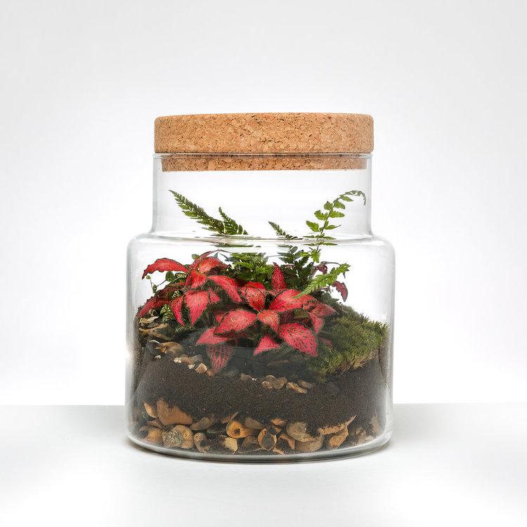 Cork Jar Terrarium
