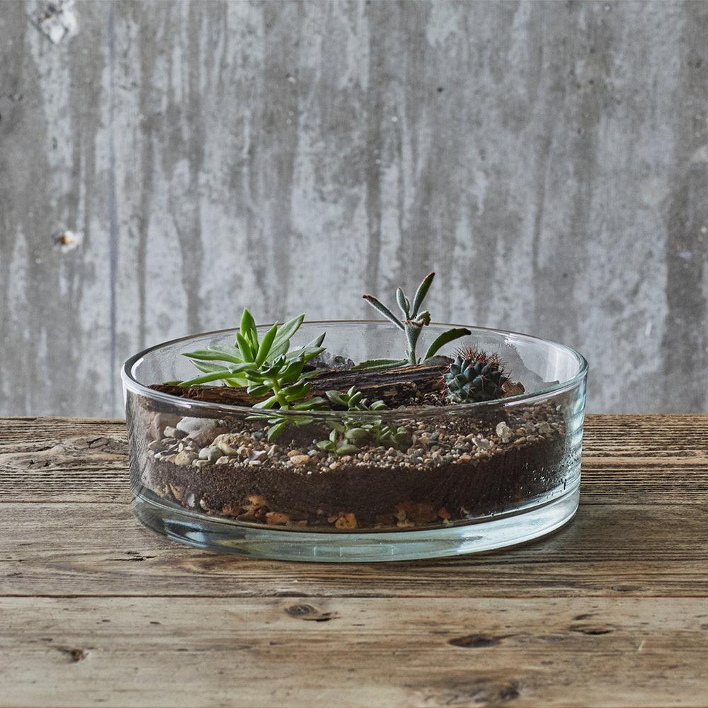 Succulent Cactus Terrarium Workshop Gift Voucher Leafage