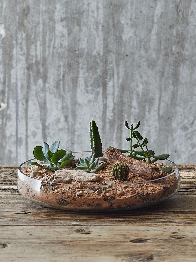 leafage-cactus-terrarium.png