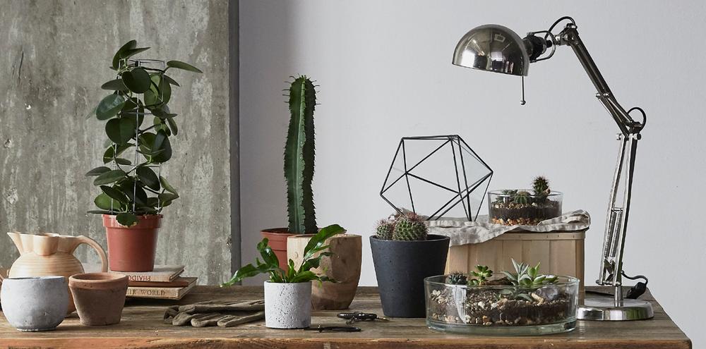 Leafage Succulent & Cactus Workshop