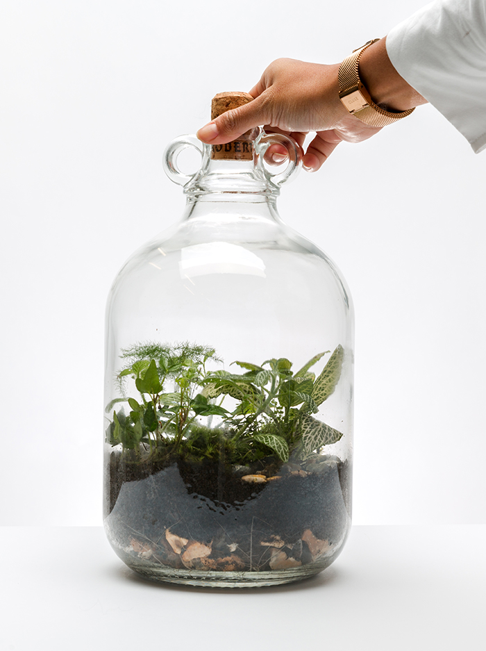 WHAT IS A TERRARIUM?tɛˈrɛːrɪəm - 🌿 A terrarium is a glass vessel filled with miniature plants, rocks and soil.🌿 They mimic real landscapes and bring nature inside.🌿 There are two types of terrariums: open & closed.🌿 The best part about a terrarium is that you can use just about anything to contain it!🌿 Terrariums allow us to witness nature's true beauty from behind glass.