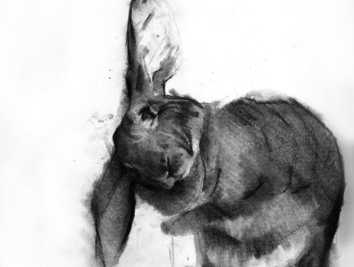 rabbit+sketch+20+x+30+cmbenjaminbjørklund.jpg