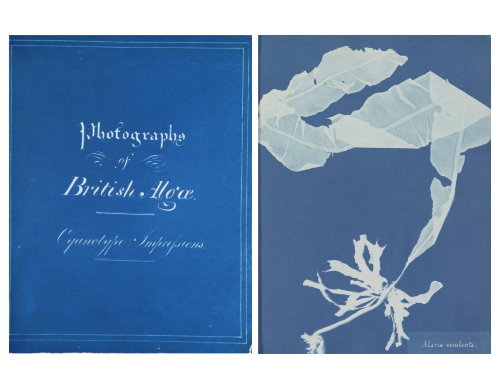 Cover page (left) and specimen (right) from Anna Atkin's  Photographs of British Algae: Cyanotype Impressions  (1843)