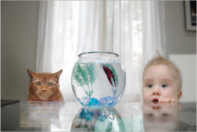 CAT-BABY-GOLDFISH-640x430.png