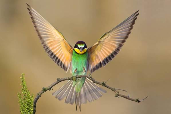 HUMM-BIRD.jpg