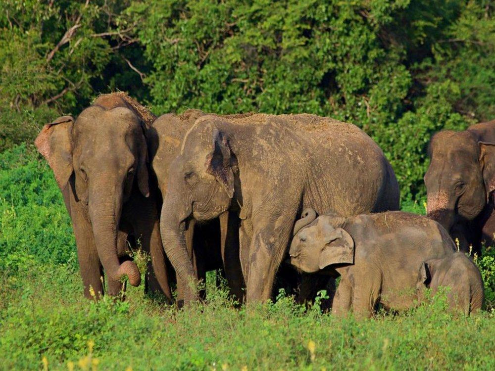 https://www.colemanconcierge.com/sri-lanka-safari/