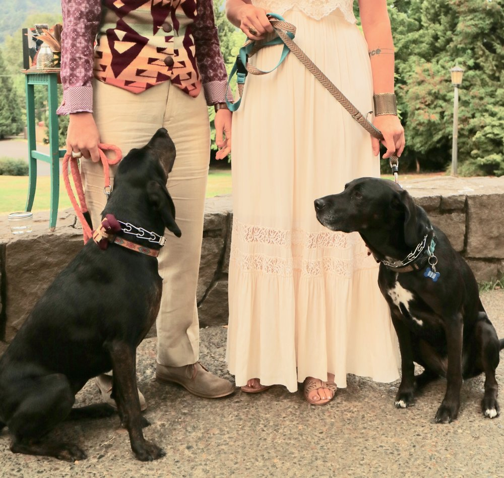 dogsinwedding.jpg