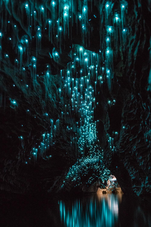 Waitomo Glowworm Caves.jpg