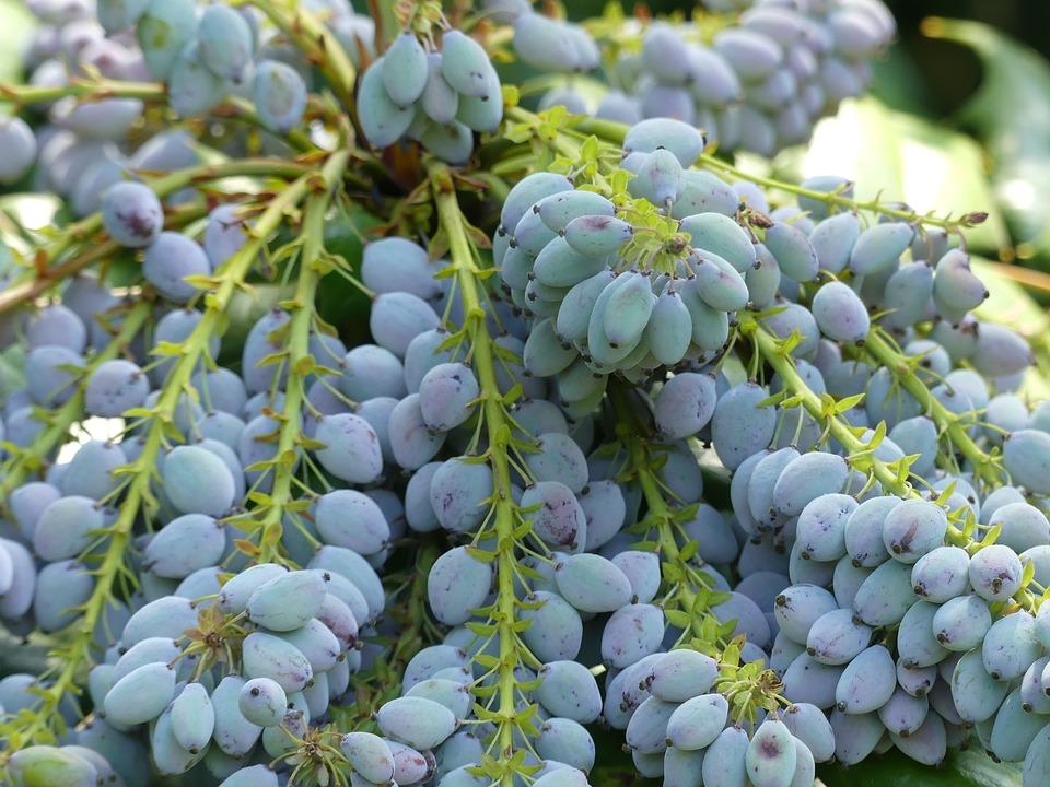 berries-2351314_960_720.jpg