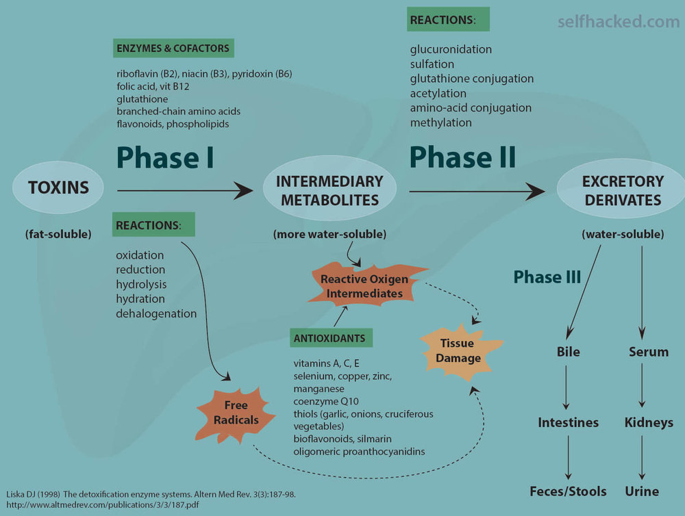Overview of metabolic detoxification processes.