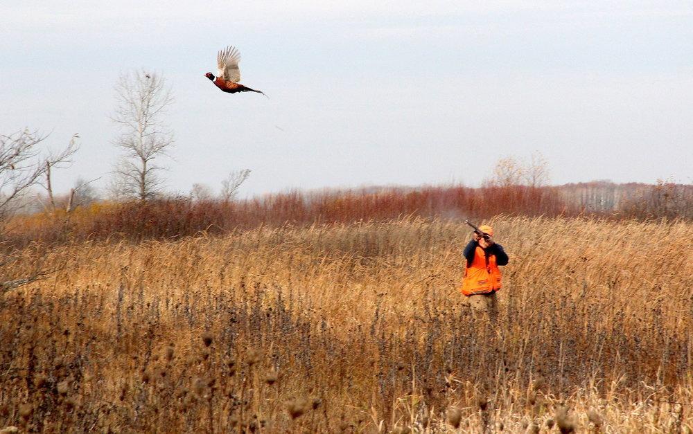 Image-BG-Pheasant-Hunt.jpg