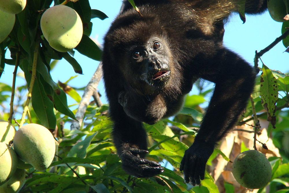 CR-Monkeys.jpg
