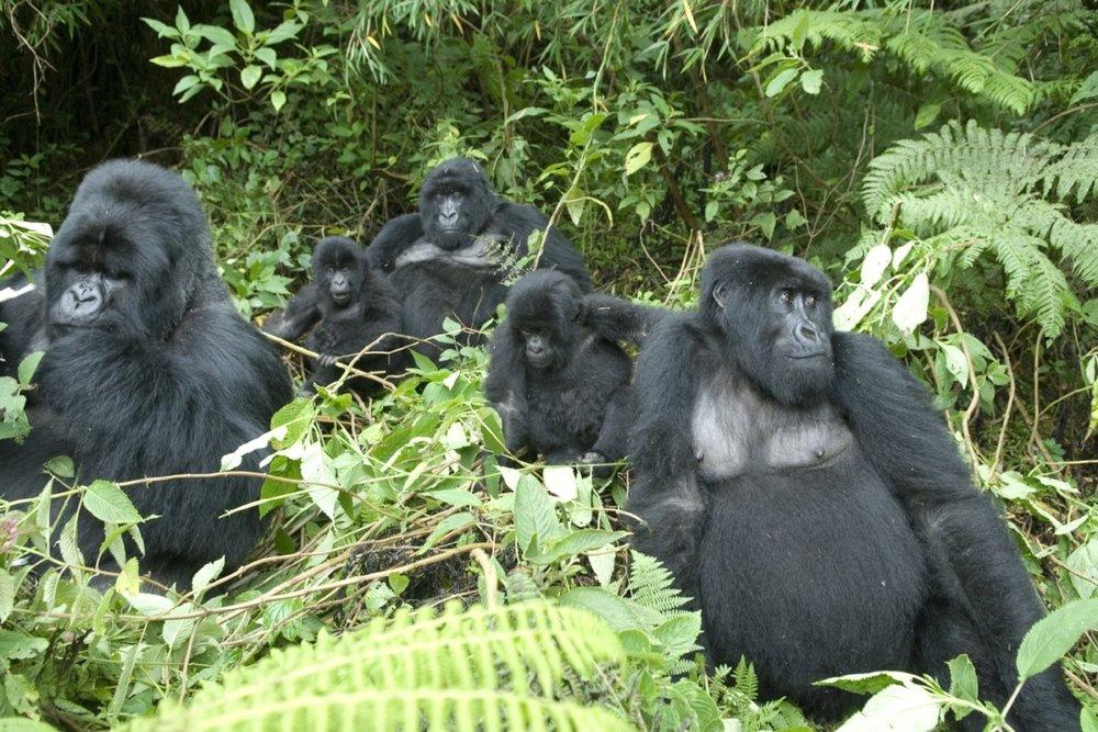 RWANDA AND UGANDA