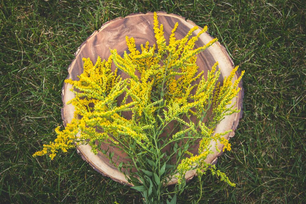 WildflowersPart2-sm-0490.jpg