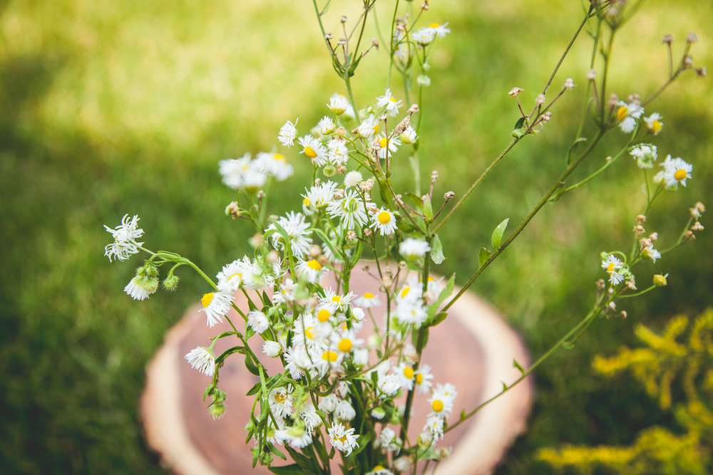 WildflowersPart2-sm-0495.jpg