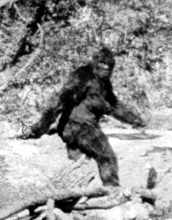 Taylor to Talmon - If you came across the Sasquatch, would you capture it or let it be?