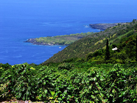 View from a Holualoa coffee farm