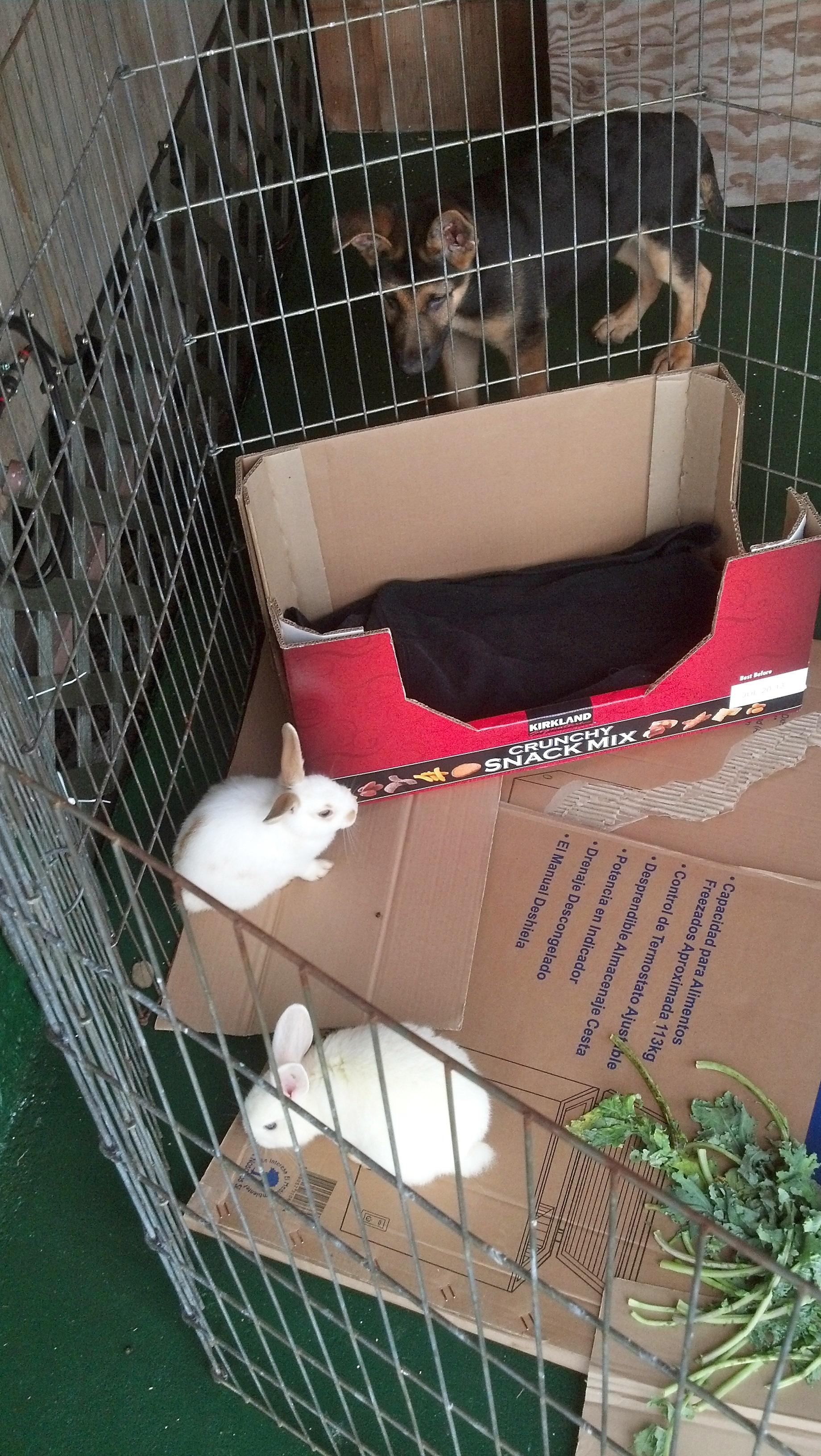 big view of bunnies 1