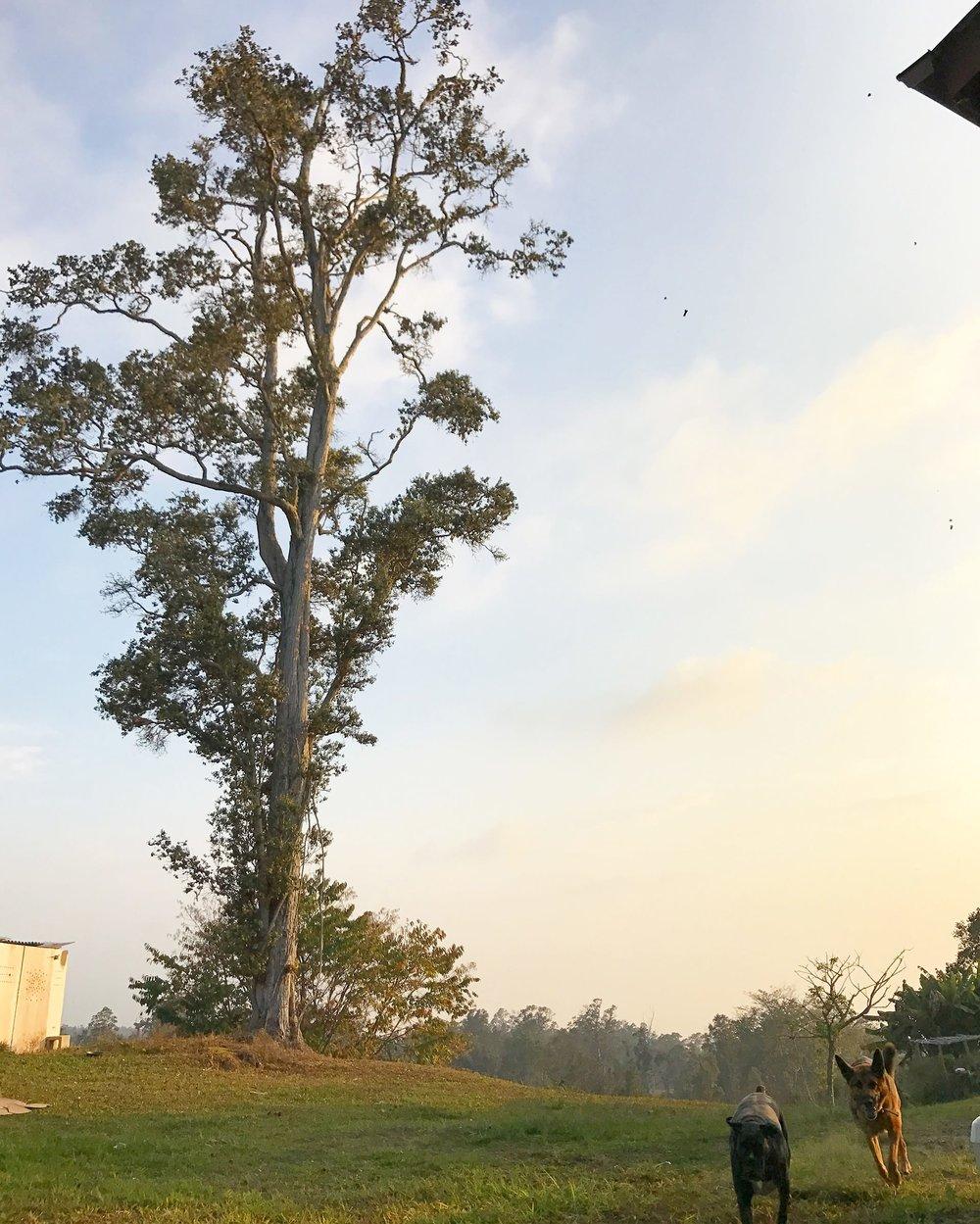 Sunshower-Farms-About-The-Farm-House-Grounds.JPG