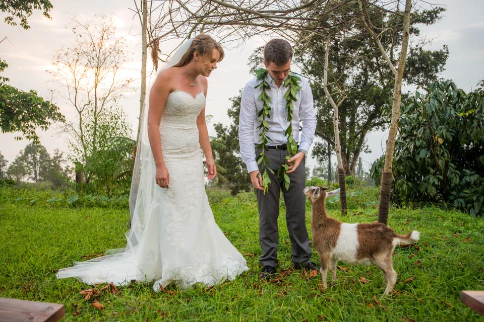 goat wedding hawaii