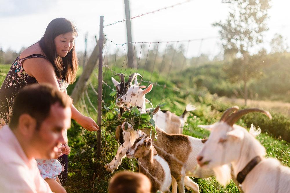 goats hawaii event big island